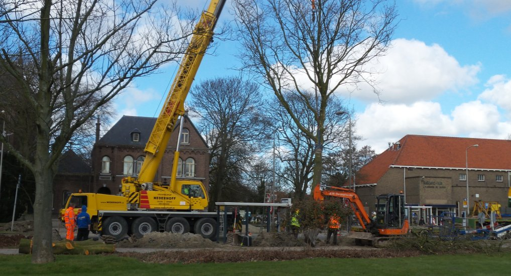 Bomen Oostlaan verplaatst.