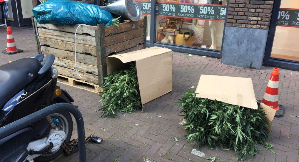 Wederom wietplantage in Ackershof2.