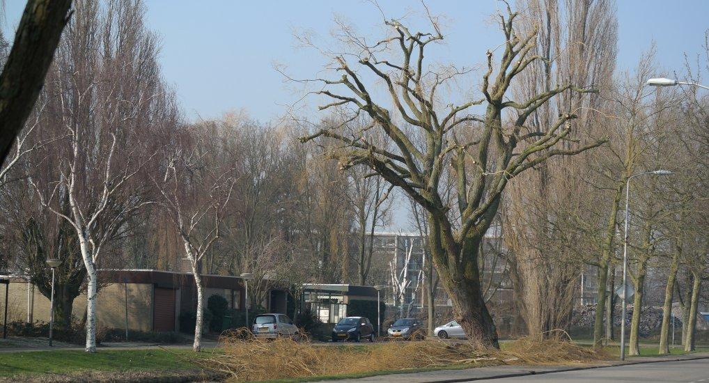Treurwilgen Meidoornlaan klaar voor de lente.